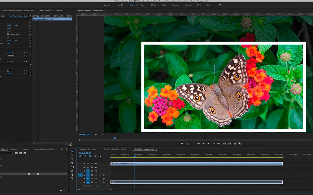 How to Crop a Video in Adobe Premiere Pro (Easy Guide)